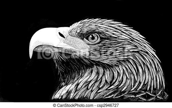Golden Eagle - csp2946727