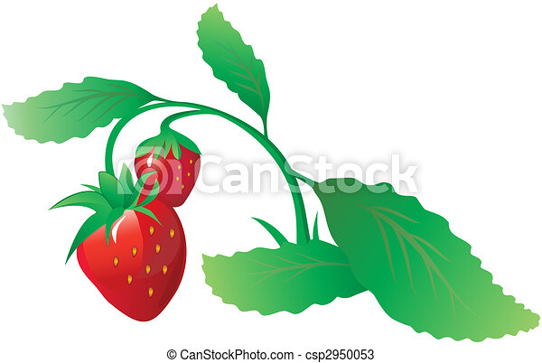 Strawberry bush - csp2950053