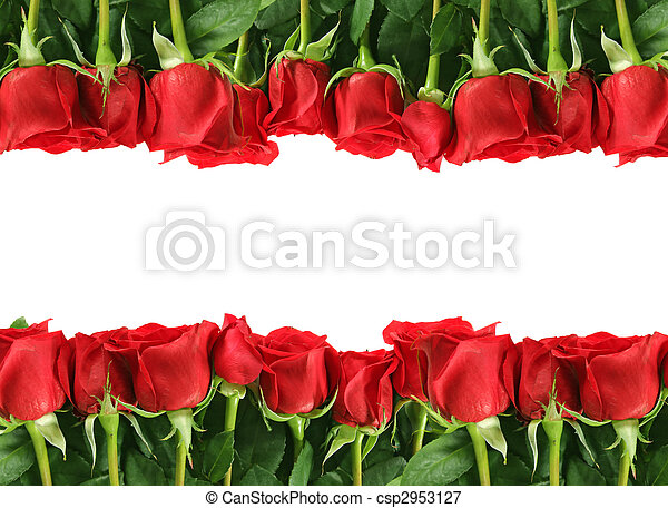 Rows of Red Roses on White - csp2953127