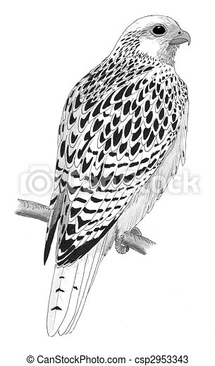 Gyrfalcon 2953343 on vintage vector graphics