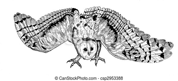 Barn Line Drawing Barn Owl Line Drawing Barn Owl