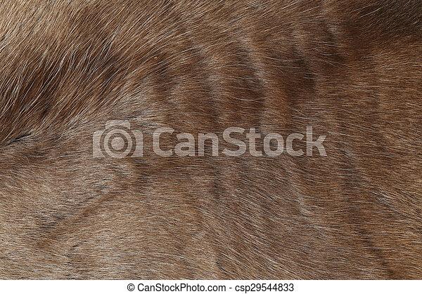 Reindeer fur, close up background