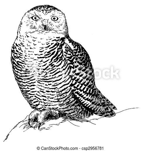 Snowy Owl - csp2956781