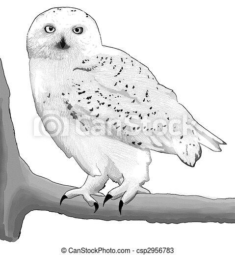 Snowy White Owl Drawing Snowy Owl Csp2956783