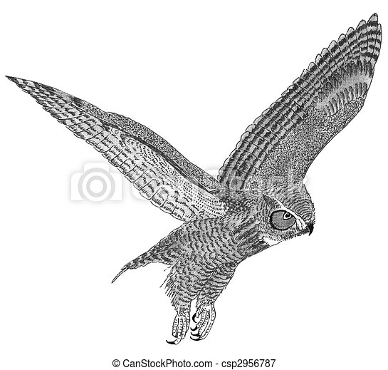 Great Horned Owl - csp2956787