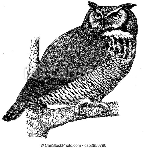 Great Horned Owl - csp2956790