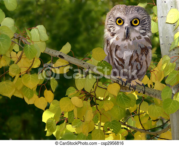 Northern Saw-whet Owl - csp2956816
