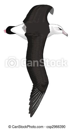 Laysan Albatross - csp2966390