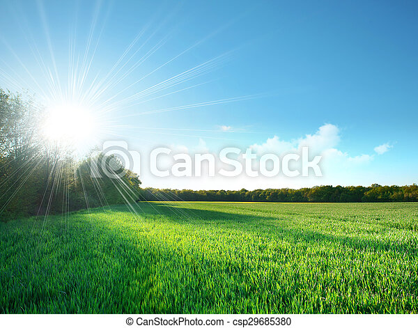 Fresh field of green grass growing slowly under the rising sun