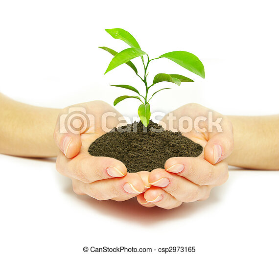 plant in hands - csp2973165