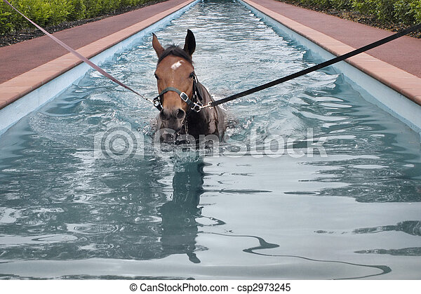 swimming horse in horse\'s swimming pool - csp2973245