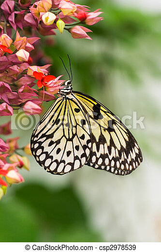 banque de photographies de cerf volant papillon vertical. Black Bedroom Furniture Sets. Home Design Ideas