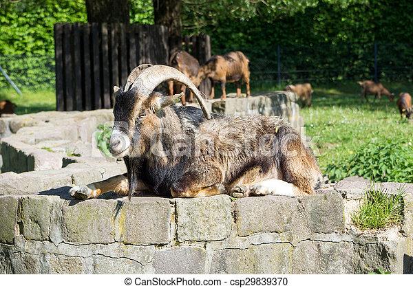 Billy goat - csp29839370