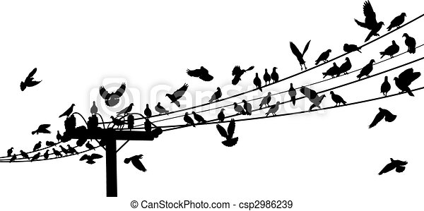 Bird roost - csp2986239
