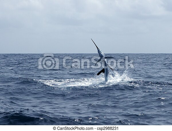 Sailfish saltwater sport fishing jumping - csp2988231