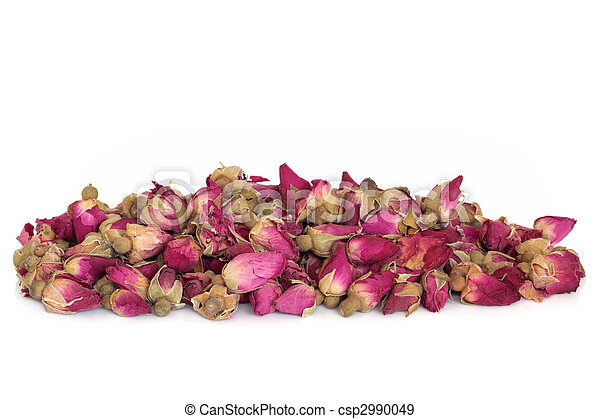 Rose Flower Buds - csp2990049