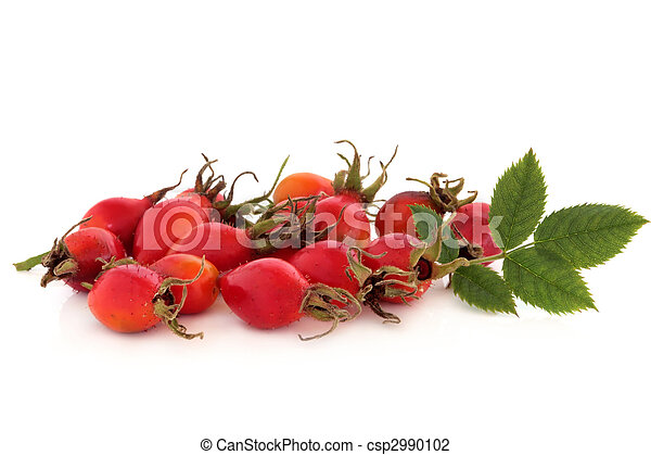 Rose Hip Wild Fruit - csp2990102