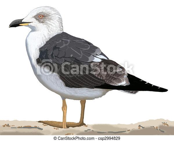 Lesser Black-backed Gull - csp2994829