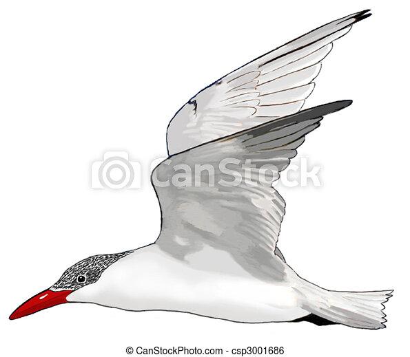 White Tern Drawing Caspian Tern Hydroprogne