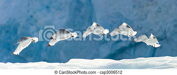 Seagull Flying Over Snow - csp3006512