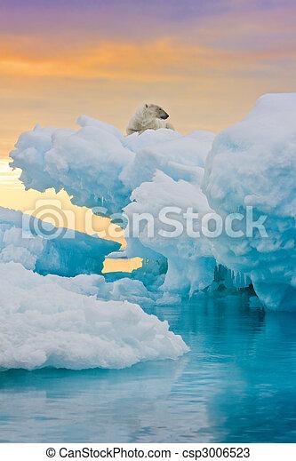 Polar Bear on Frozen Outcrop - csp3006523