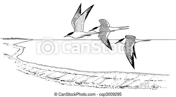 White Tern Drawing Common Tern Csp3009295