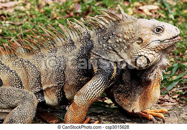 Reptile - csp3015628