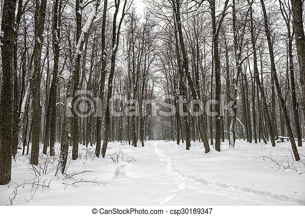New Year landscape of mysterious winter forest with snowstorm and footpath in a fog, Russia