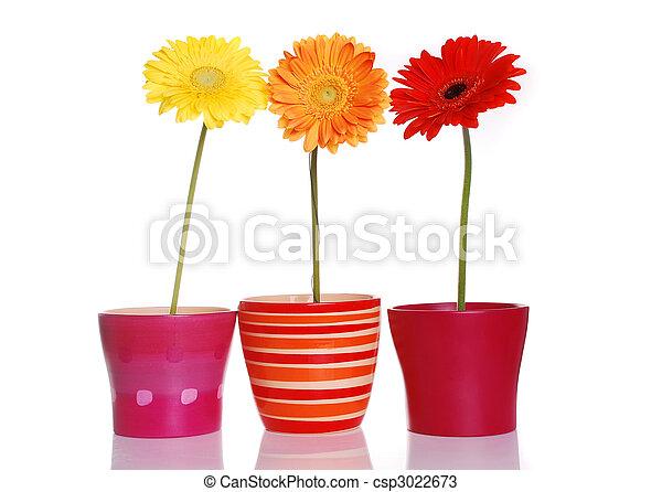 primavera, flores, coloridos - csp3022673