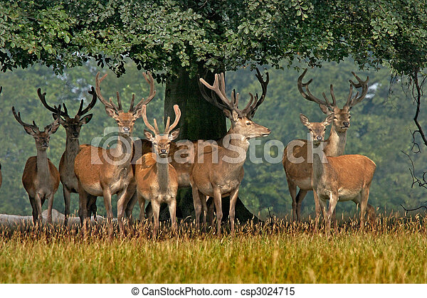 Red Deer in Yorkshire - csp3024715
