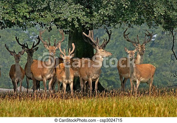 Red Deer in Yorkshire - csp3024715