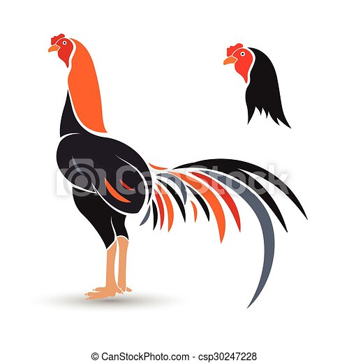 Vector Illustration of game-cock - Game-cock hand drawn ...