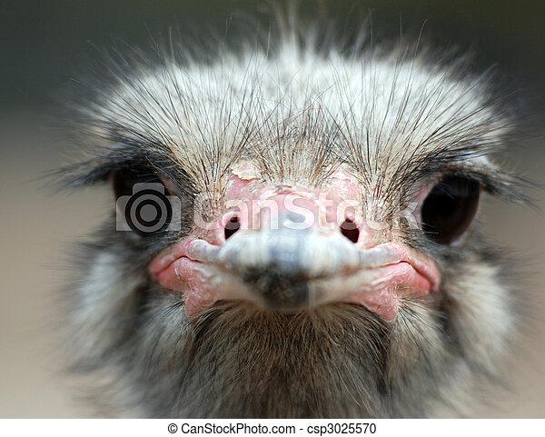 ostrich portrait - csp3025570