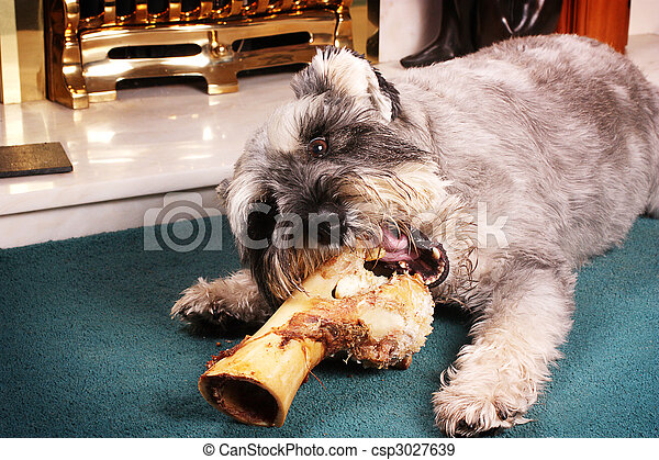 Dog chewing bone - csp3027639