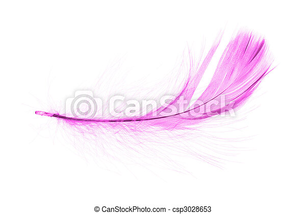 pink feather - csp3028653