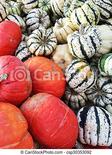 Variety of colorful squashes - csp30353092