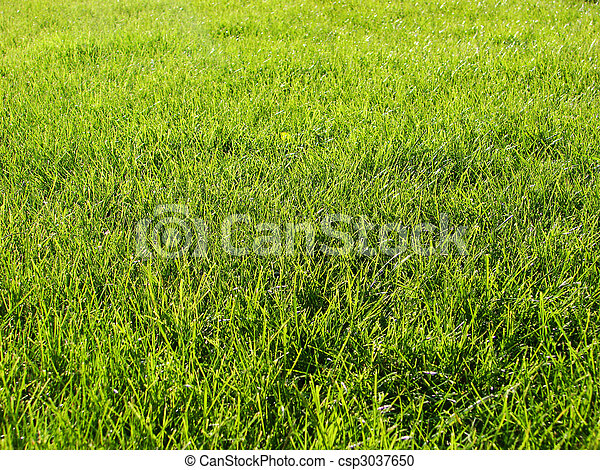 lawn freshly mowed   - csp3037650