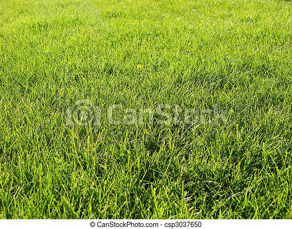 lawn freshly mowed   - csp3037650