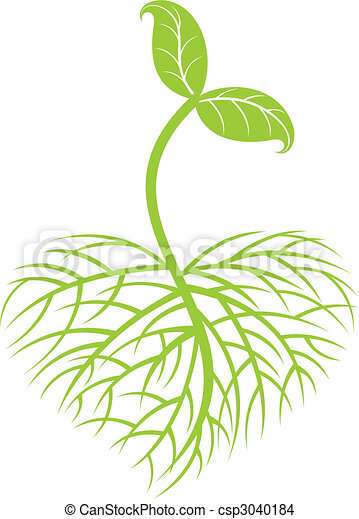 growing plant - csp3040184