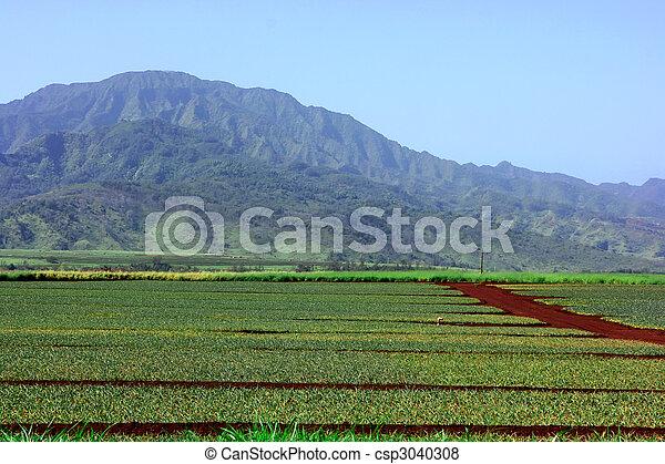 plantação, abacaxi - csp3040308