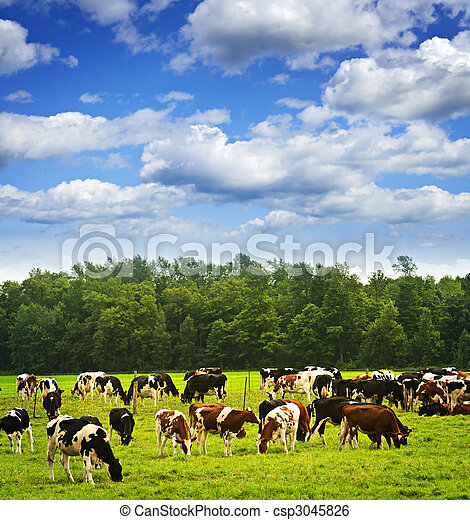Cows in pasture - csp3045826