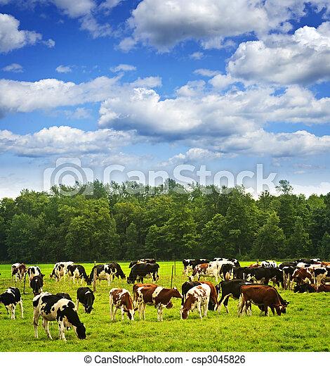 Cows in pasture - csp3045826