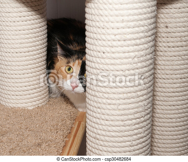 Frightened tricolor cat hiding behind scratching posts