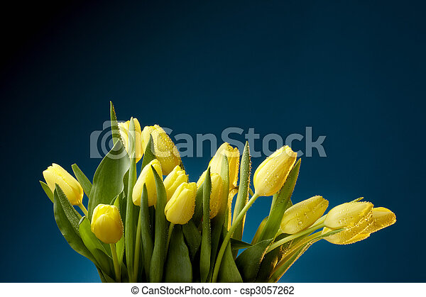 Yellow Tulips - csp3057262