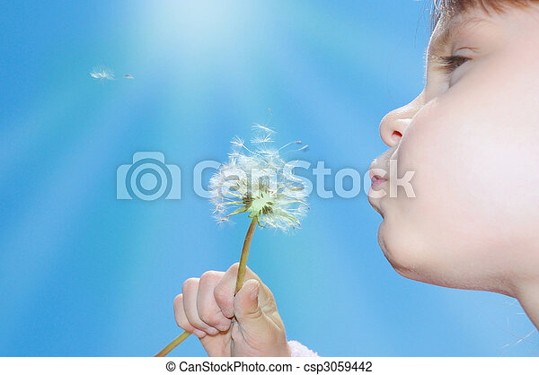 dandelion wishing blowing seeds - csp3059442