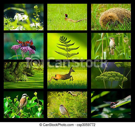 wild nature - csp3059772