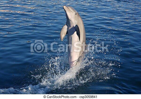 stock fotografie van de cara239ben natuur dolfijn