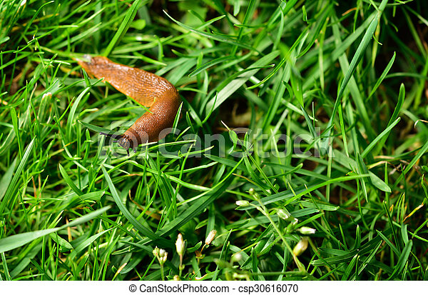 Image de garden invasion limace espagnol spanish for Jardin en espagnol