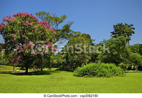 Green trees under blue sky - csp3062180