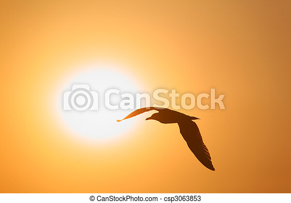 Silhouette of bird opposite sun - csp3063853